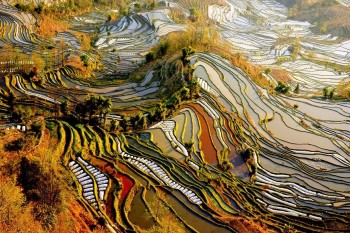 Pirinčana polja - Yunnan, Kina