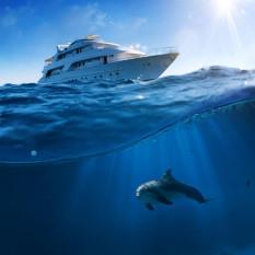 na-vodi_delfini2