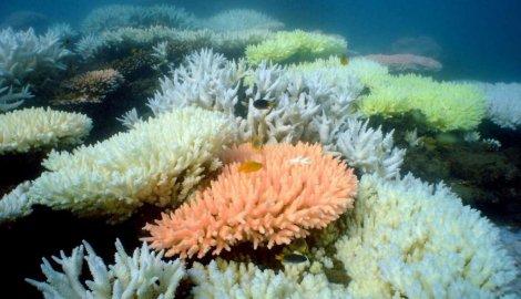 na-vodi_koral-2