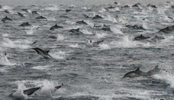 na-vodi_delfini