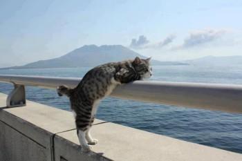 na-vodi_cat