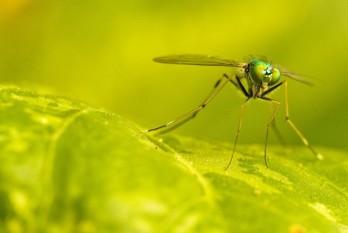 na-vodi_komarac
