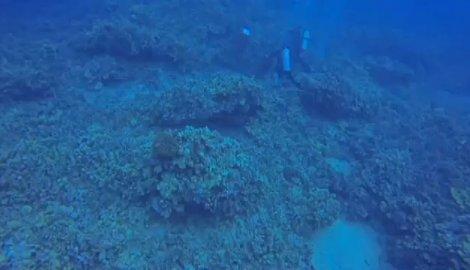 na-vodi_koralni-greben-1