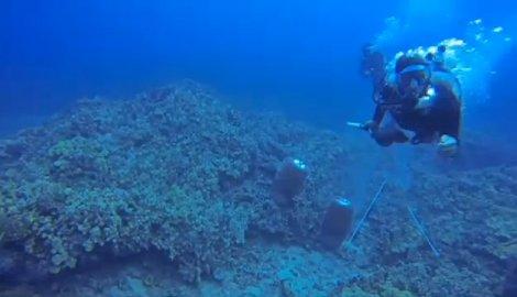 na-vodi_koralni-greben-2