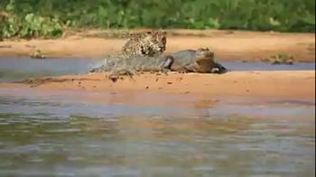 na-vodi_aligator-jaguar