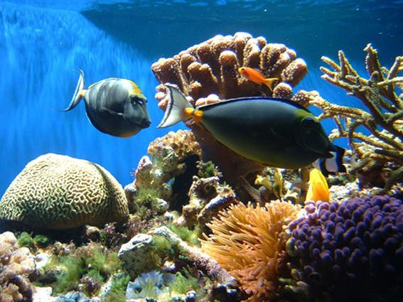 na-vodi_koral-1