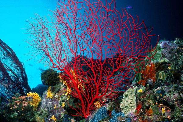 na-vodi_koral