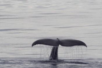 na-vodi_kit