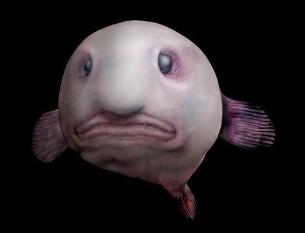 na-vodi_blobfish