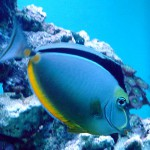 na-vodi_riba
