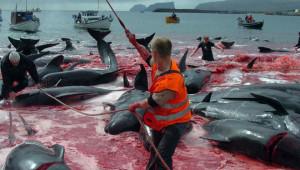 na-vodi_farska-ostrva-kitov