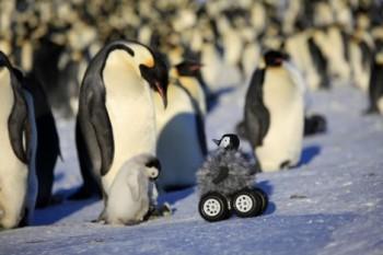 na-vodi_pingvini