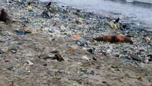 na-vodi_uginuli-morski-lavovi