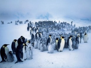 na-vodi-pingvini