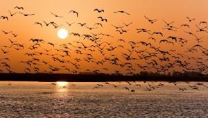 na-vodi_ptice