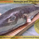 na-vodi_riba-dalmatinski-fugu