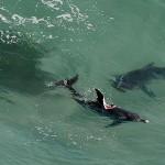 na-vodi_delfin-ajkula