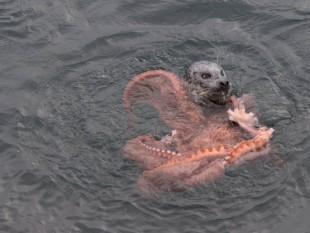 na-vodi_foka-hobotnica