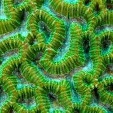 na-vodi_korali-13