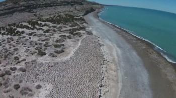 na-vodi_plaža-kormorani