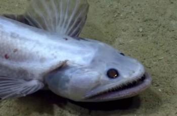 na-vodi_dno-okeana-riba