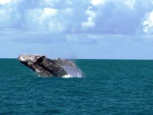 na-vodi_grbavi-kit