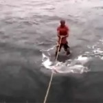 na-vodi_kit-ajkula
