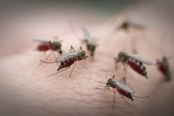 na-vodi_komarac5
