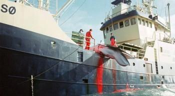 na-vodi_lov-na-kitove