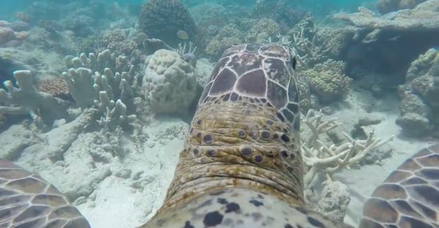 na-vodi_koralni-greben-kornjaca