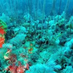 na-vodi_reef-parks-victoria