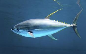 na-vodi_tuna