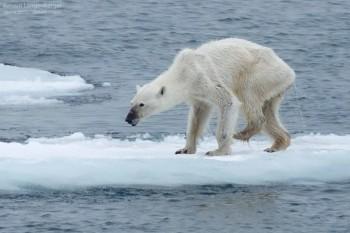 na-vodi_beli-medved