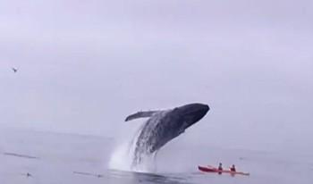 na-vodi_grbavi-kit-kajakasi