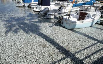 na-vodi_pomor-ribe