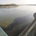 na-vodi_dunav-zagadjenje-novi-sad-foto-robert-getel