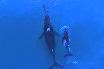na-vodi_kit-delfin