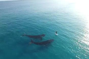 na-vodi_sup-kitovi