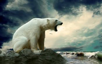 na-vodi_Polar-Bear