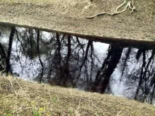 na-vodi_kanal-zagadjenje-apatin