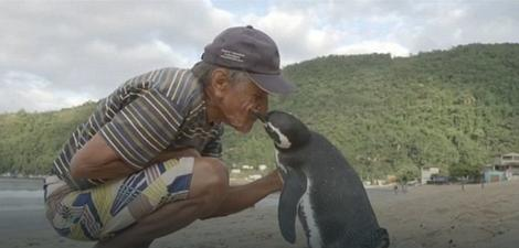 na-vodi_pingvin