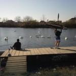 na-vodi_vizelj-labudovi-veslači