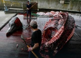 na-vodi_japan-kitovi-2