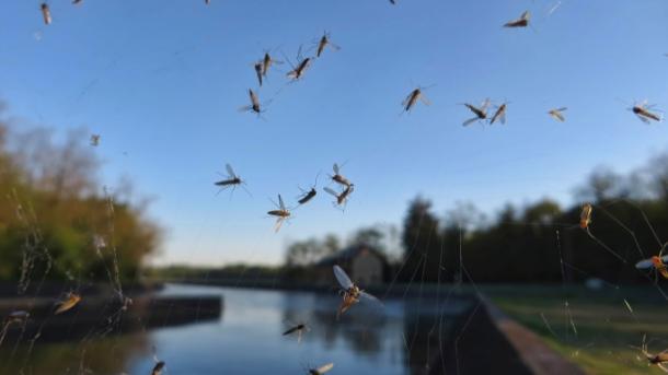 na-vodi_komarci
