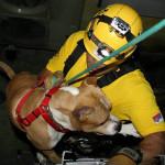 NA_VODI_Animal_Rescue_Serbia02