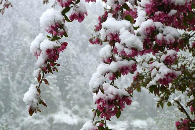 NA_VODI_cvece_sneg01