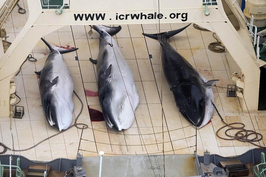 NA_VODI_japan_kitovi01