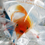 Image: Fish in plastic bags street sales