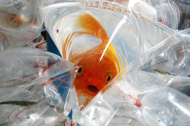 Image: Fish in plastic bags street sales