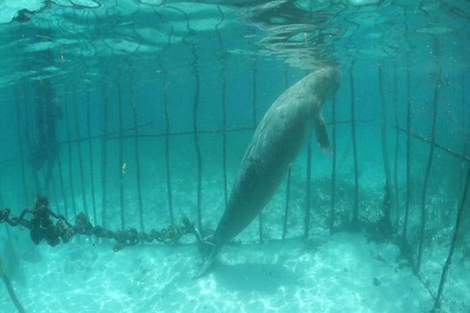 NA_VODI_dugong01